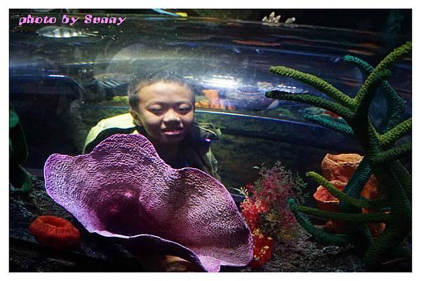 墨爾本水族館5.jpg