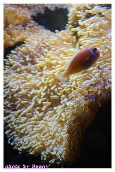 墨爾本水族館6.jpg
