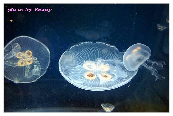 墨爾本水族館7.jpg