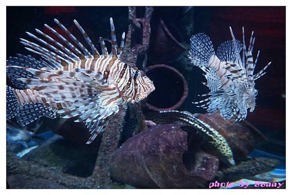 墨爾本水族館8.jpg
