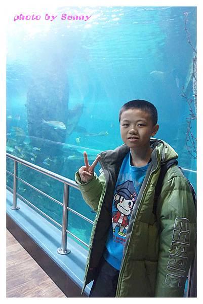 墨爾本水族館9.jpg