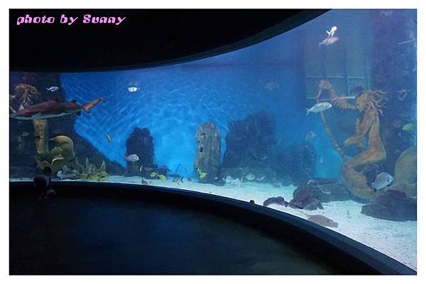 墨爾本水族館10.jpg