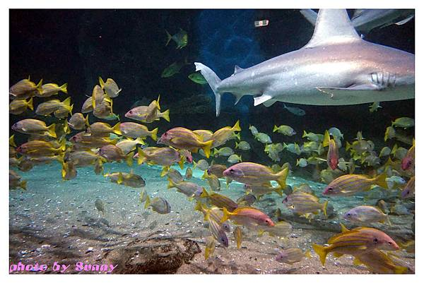 墨爾本水族館11.jpg