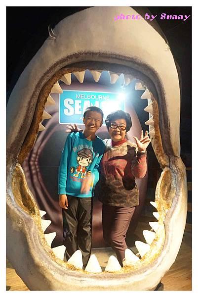 墨爾本水族館12.jpg