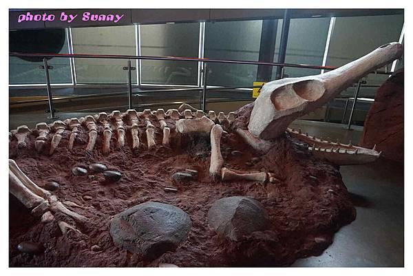 墨爾本水族館13.jpg