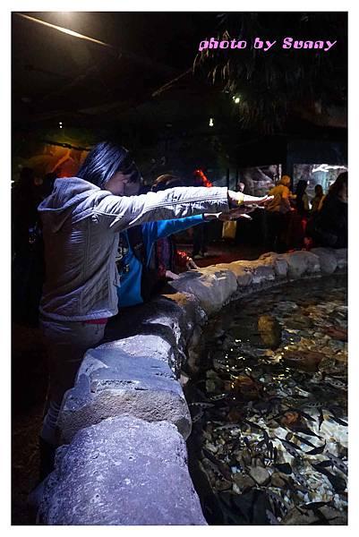 墨爾本水族館15.jpg