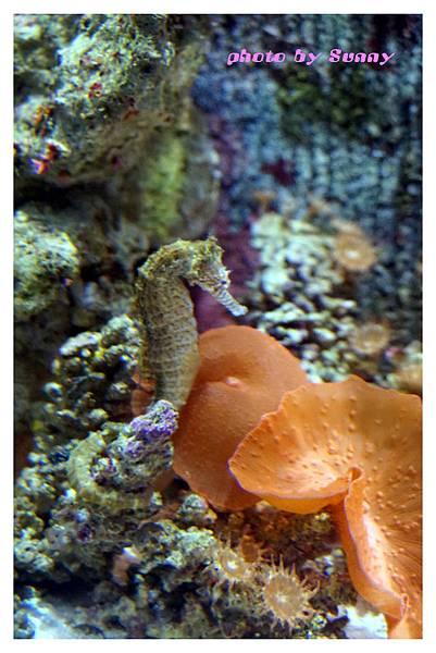 墨爾本水族館16.jpg