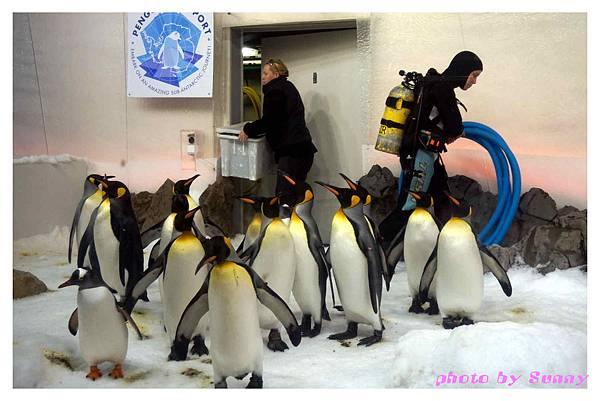 墨爾本水族館18.jpg