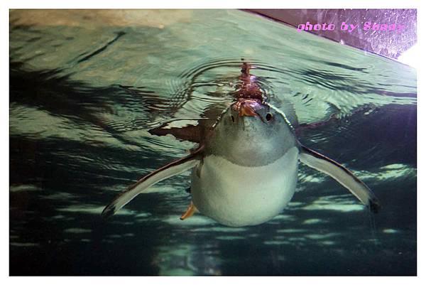 墨爾本水族館20.jpg