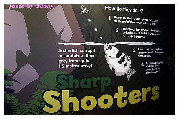 墨爾本水族館23.jpg