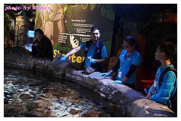 墨爾本水族館24.jpg