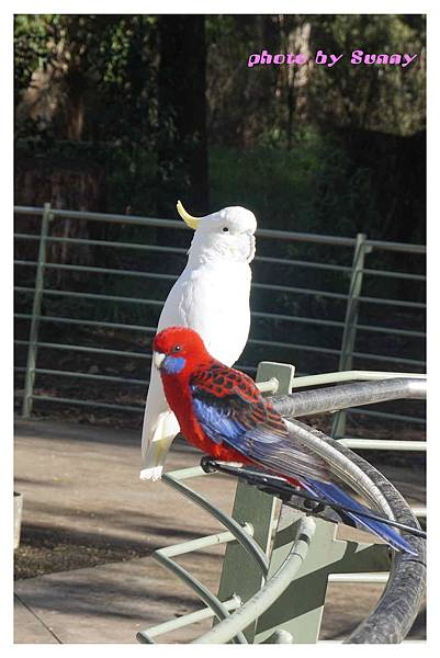 鸚鵡園1.jpg