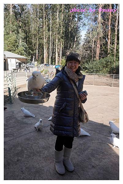 鸚鵡園2.jpg