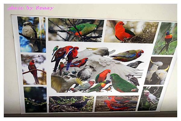 鸚鵡園11.jpg