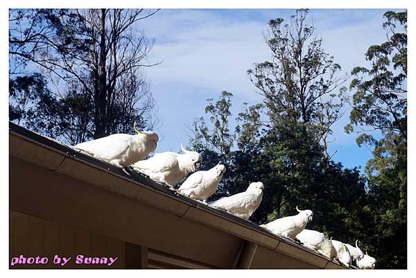 鸚鵡園12.jpg