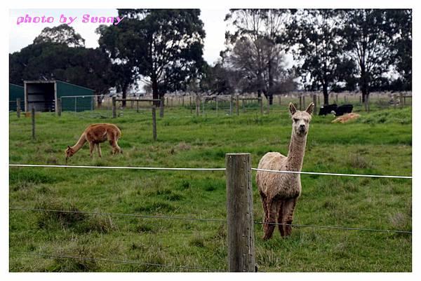 WARROOK農場1.jpg
