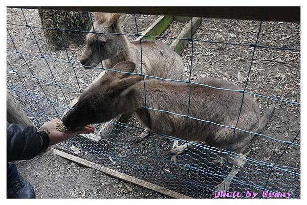 WARROOK農場4.jpg