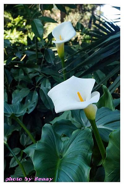 fitzroy gardens17.jpg