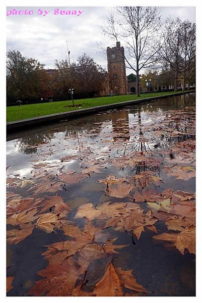 墨爾本大學4.jpg