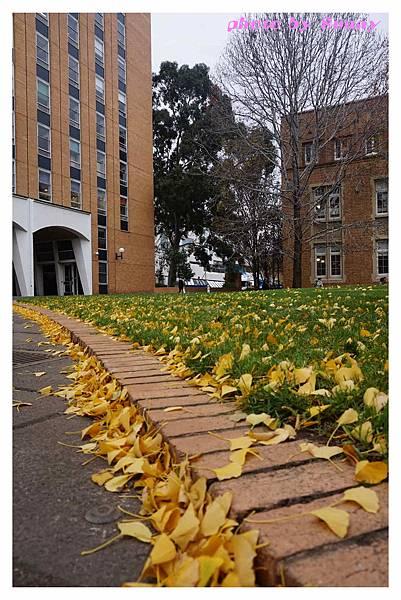 墨爾本大學16.jpg