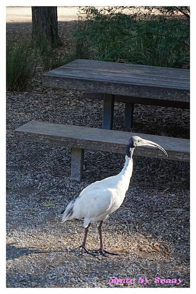 墨爾本Zoo24.jpg