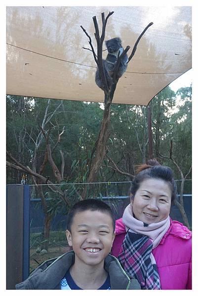 墨爾本Zoo1.jpg