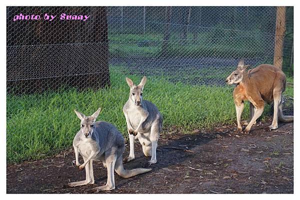 墨爾本Zoo9.jpg