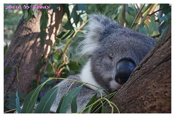 墨爾本Zoo17.jpg