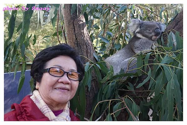 墨爾本Zoo20.jpg