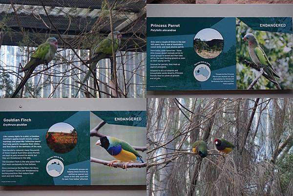 墨爾本Zoo25.jpg