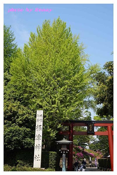 根津神社1.jpg