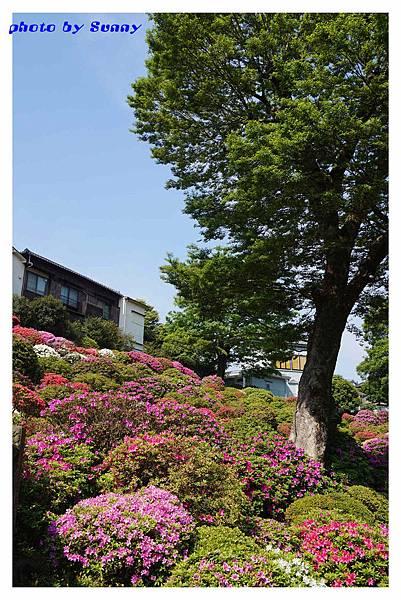 根津神社3.jpg