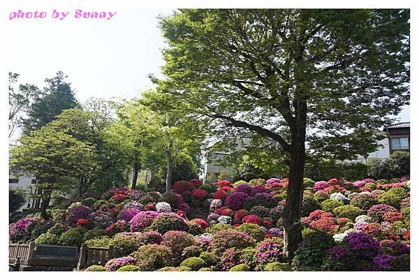 根津神社5.jpg