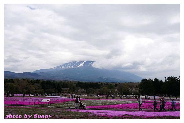 富士山芝櫻祭4.jpg