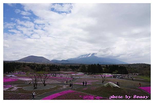 富士山芝櫻祭7.jpg