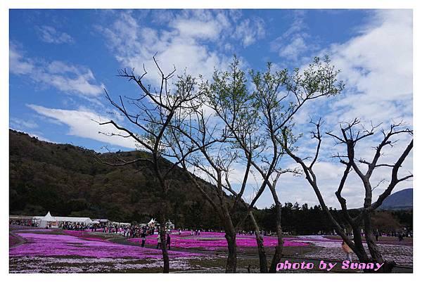 富士山芝櫻祭10.jpg