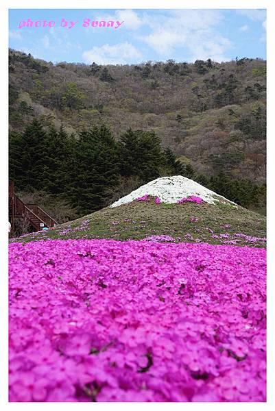 富士山芝櫻祭11.jpg