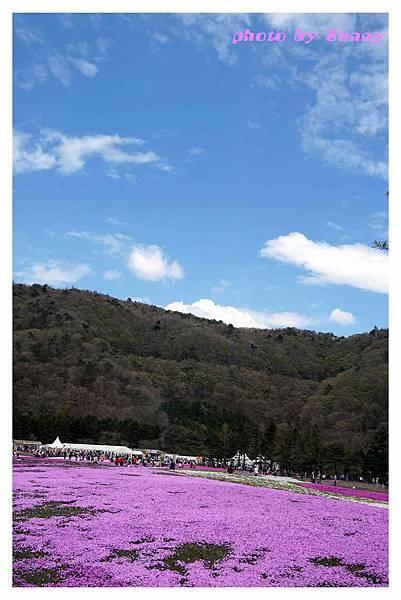 富士山芝櫻祭14.jpg