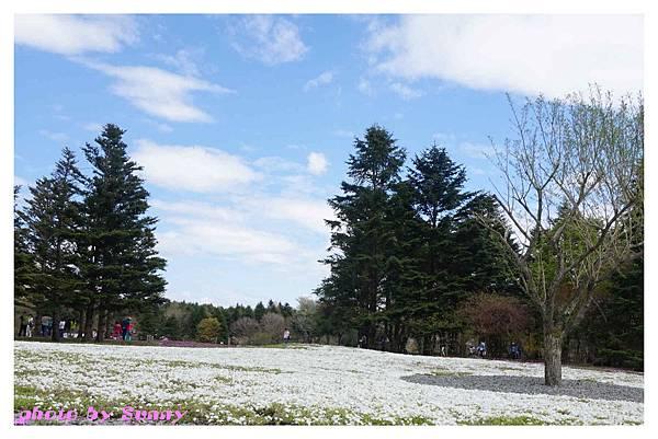富士山芝櫻祭20.jpg