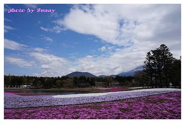 富士山芝櫻祭21.jpg
