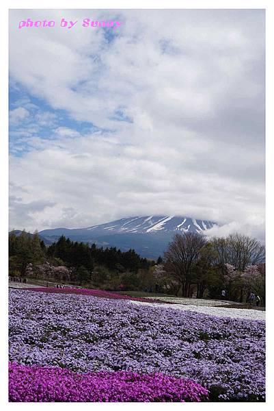富士山芝櫻祭22.jpg