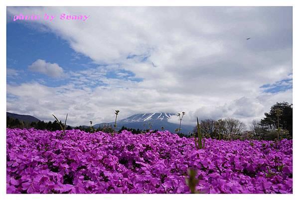 富士山芝櫻祭25.jpg