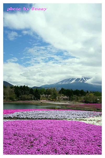 富士山芝櫻祭26.jpg