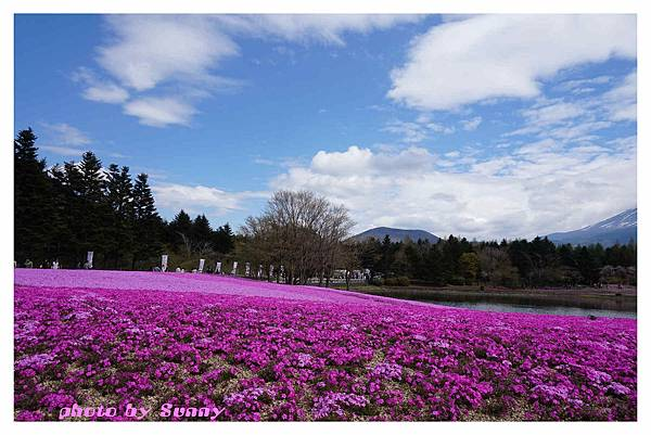 富士山芝櫻祭27.jpg