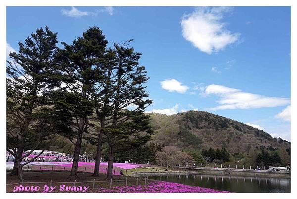 富士山芝櫻祭32.jpg