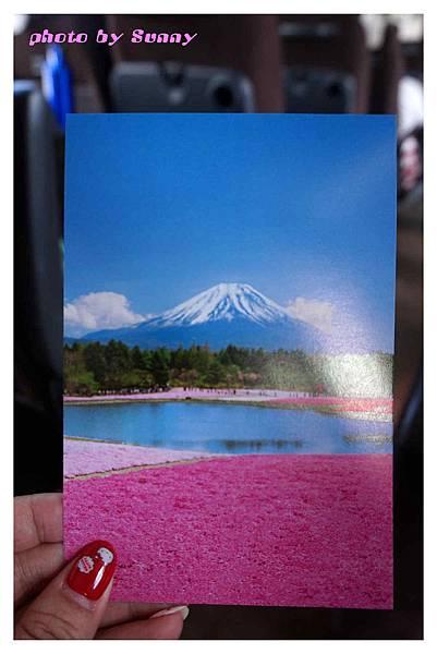 富士山芝櫻祭34.jpg