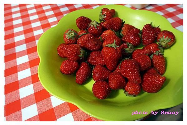 草莓園1.jpg