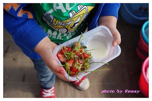草莓園13
