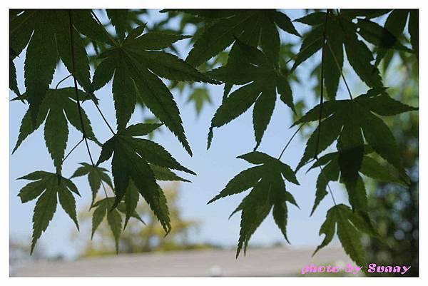 足利藤園19.jpg