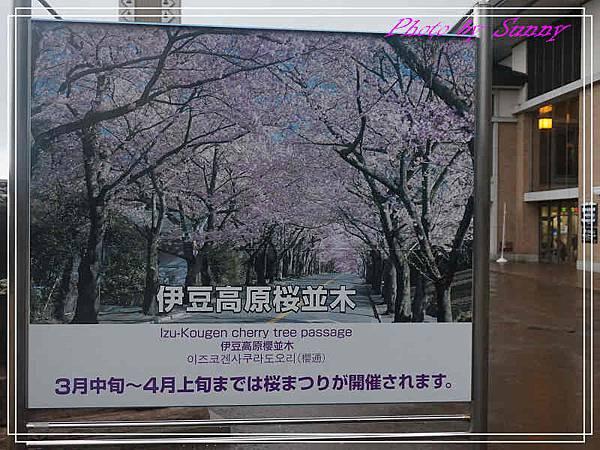 伊豆泰迪熊博物館68.jpg